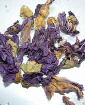 紫翼天葵花茶